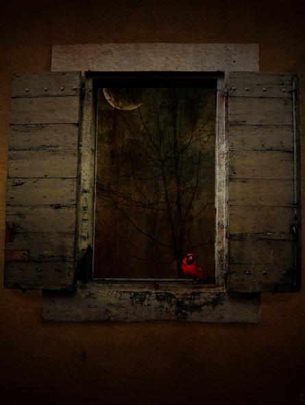 Red bird - miniatyrbilde. Fotomanipulasjon av Elisabeth Berggren Hansen