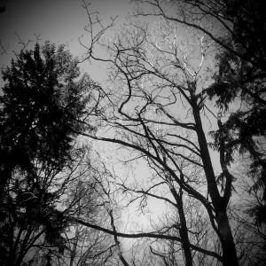 Vinterlandskap - fotografi av Elisabeth Berggren Hansen