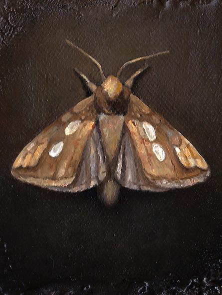 The Golden Moth, oljemaleri av Elisabeth Berggren Hansen