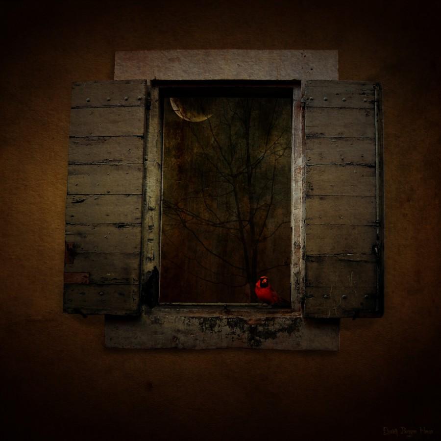 Red bird. Fotomanipulasjon av Elisabeth Berggren Hansen