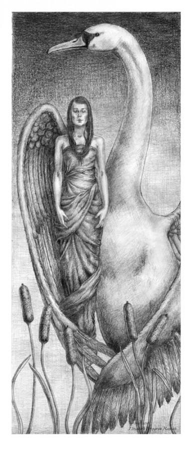 Swan. Tegning av Elisabeth Berggren Hansen