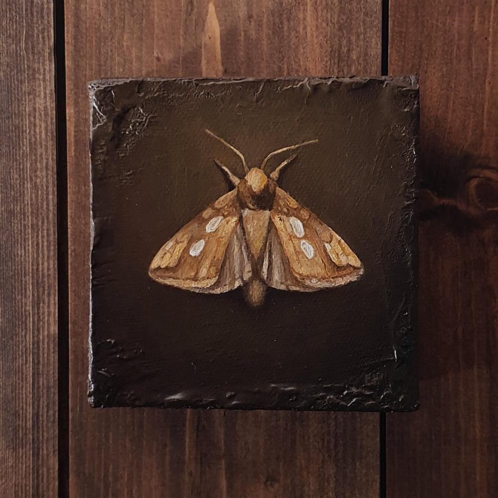 The Golden Moth, oljemaleri hengende på vegg av Elisabeth Berggren Hansen