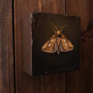 The Golden Moth. Malt på 10 x10 cm lerret, oljemaleri av Elisabeth Berggren Hansen